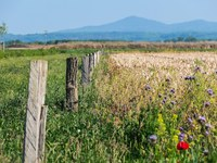 Wie wird mehr Biodiversität entlang von Velowegen erreicht?